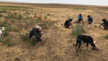 Kulu'da Köpekle Tavşan Avlayan Kişilere Ceza Kesildi