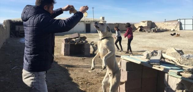 Konya Büyükşehir'den Sokak Köpeklerine Bakım Desteği