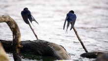 Konya'da Kuşlar Soğuktan Olumsuz Etkilendi
