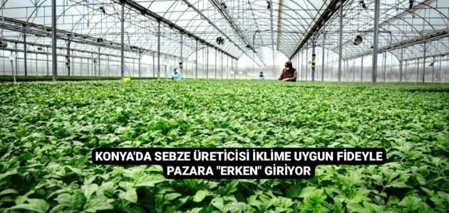 Konya'da Sebze Üreticisi İklime Uygun Fideyle Pazara