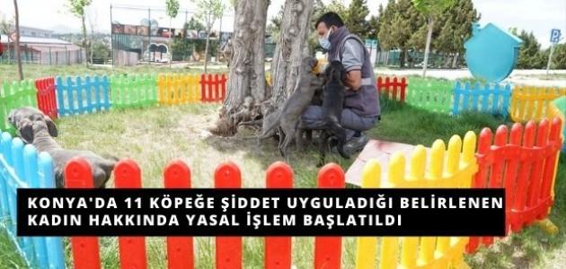 Konya'da 11 Tane Köpeğe Şiddet Uygulandığı Belirlendi