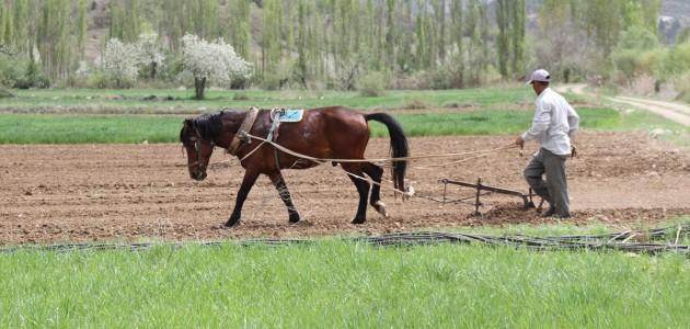 Şeker Fasulyesi İçin Çiftçiler ve Binek Hayvanlar İş Başında