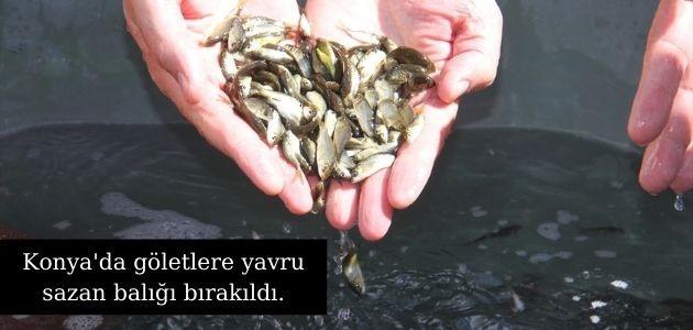 Konya 'da göletlere  yavru sazan balığı bırakıldı.